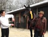 SIr Easy als gekörter Hengst Februar 2013 04