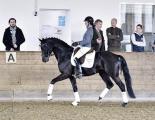 Trakehner -Dressur-Sichtungstag mit Klaus und Belli Balkenhof am 14.4.2015 in coesfeld