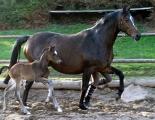 Schwalbenmelodie 4-2010-1