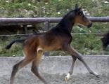 Schwalbenmelodie 4-2010-2