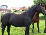 2011-08 Winterfee-9